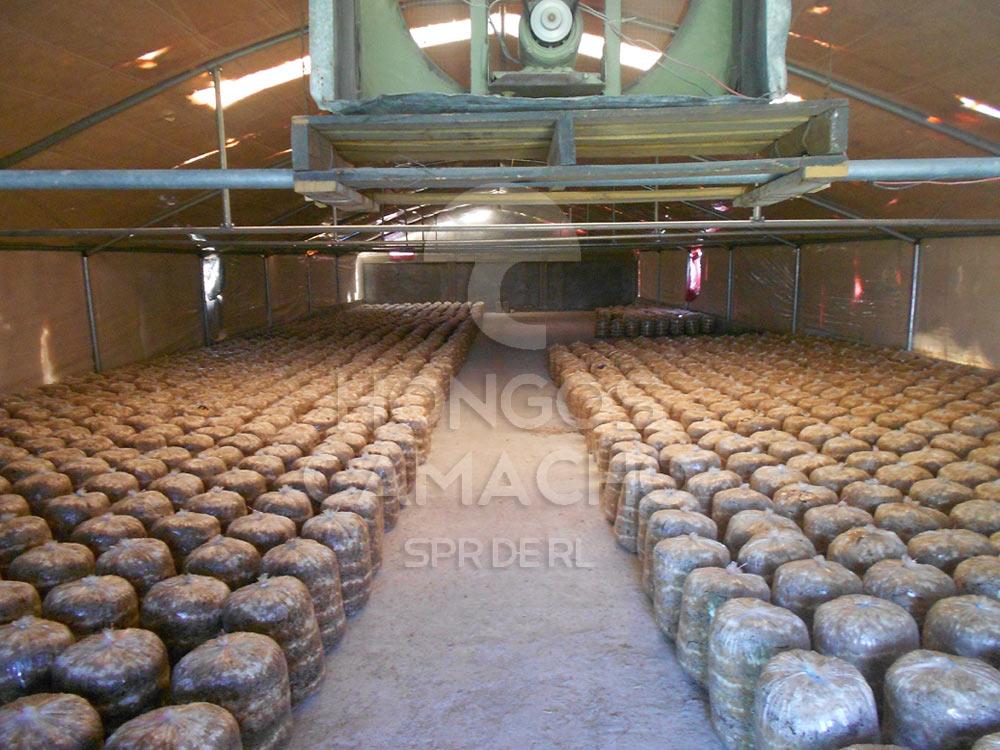 Construcción de Invernaderos de Hongo Seta México Productores de Hongo Seta