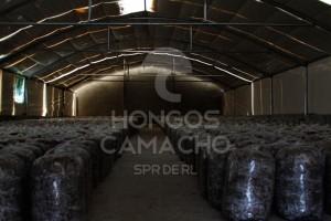 Invernadero Hongo Seta México