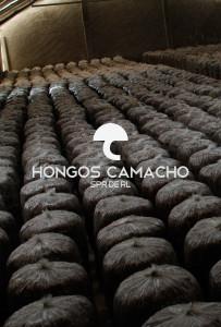 Invernaderos de hongo Seta México productor