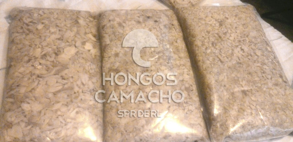 Hongo Seta en Salmuera México venta